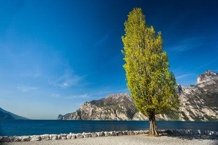Tall green poplar tree near garda Lake in Torbole, minimalistic authentic morning landscape