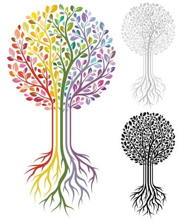 raices de plantas: �rbol Vectores
