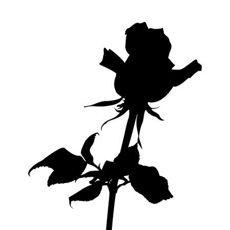 silueta: Rose