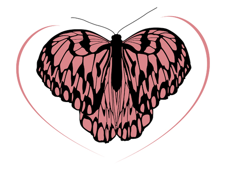 traced: Hight quality traced butterfly 1