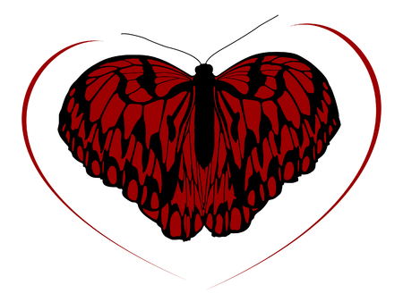Hight quality traced butterfly. Vector Illustration