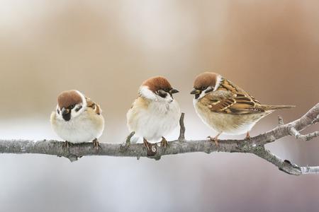 Grappige vogel zittend op een tak in het park en op zoek Stockfoto - 66100183