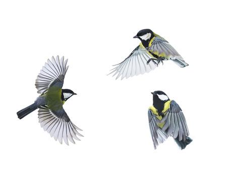 작은 새가 다양 한 포즈에 고립 된 흰색 배경에 날아간 다.
