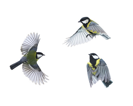 a small bird flies on white isolated background in various poses