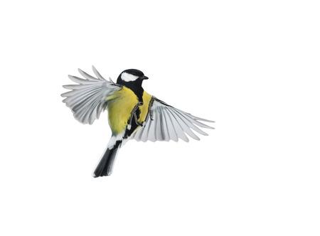 흰색 배경에 비행 조류 널리 퍼져 날개와 깃털
