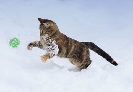 cheerful striped kitten jumps for the ball on white snow in winter Standard-Bild