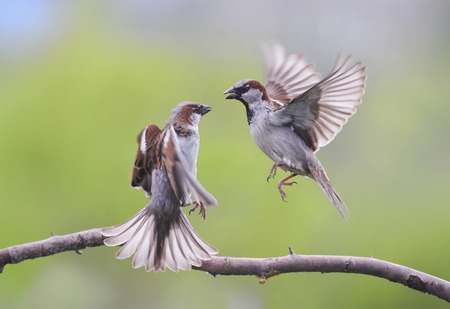 날개를 치고 흔들며 날개 짓하는 한 쌍의 새들.