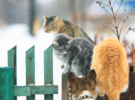 dog chased cats on a wooden fence in the village Stock Photo