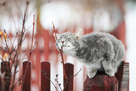 sweet tabby cat fondled on a branch in spring on a fence  Stockfoto