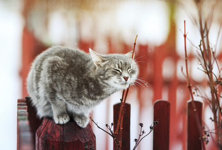 cat walks in the spring in the village and fondled Stock Photo