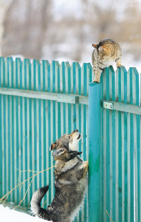 dog chased the cat on a high wooden fence in the village