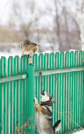 angry dog ??chased the cat on a high wooden fence