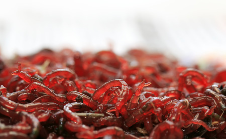 squirm:  bunch of small red mosquito larvae bloodworm is lying on a white background