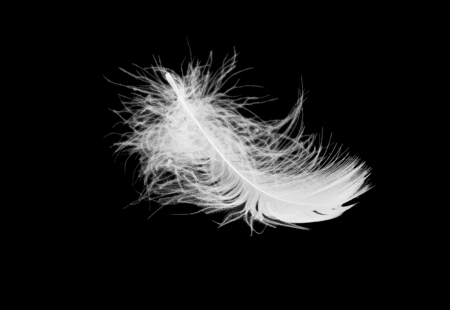 white fluffy bird feather lies on a black isolated background