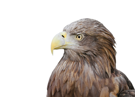 the profile of a bird an eagle with a big beak on a white isolated background