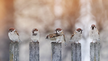 a lot of little funny birds sitting on an old wooden fence Sunny day