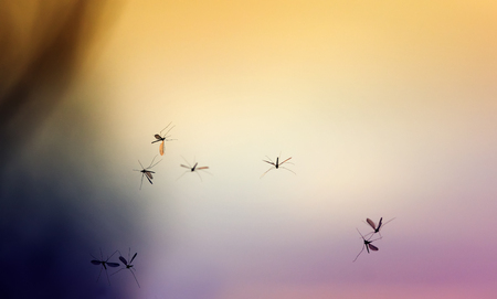 beautiful natural background with sunset and a bunch of flying mosquitoes Stock Photo