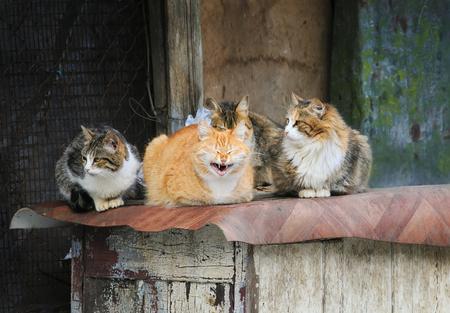 Nette Strass Katzen mit lustigen Gesichtern lügen Gruppe an der Scheune