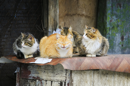 cute street cats with funny faces lie group at the barn Stockfoto
