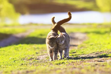 かわいいの 2 つは隣に緑の草の上を歩く子猫をストライプし、夏の日にふれて