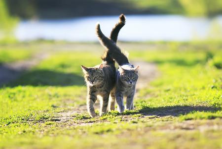 Zwei niedliche gestreifte Kätzchen zu Fuß auf grünem Gras neben und streicheln an einem Sommertag