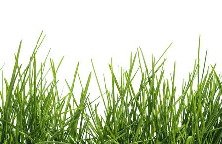 Frühling grünes Gras auf weißem Hintergrund isoliert