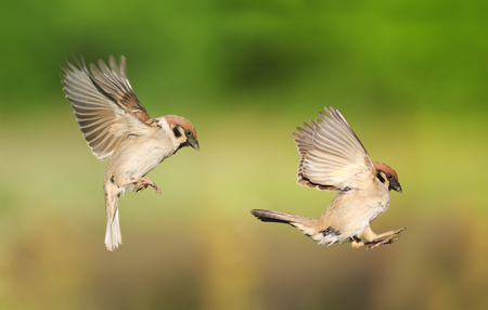 a pair of birds flying one after another to spread its wings in the summer