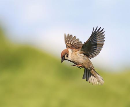 小鳥すずめ飛び交う夏に羽ばたいて