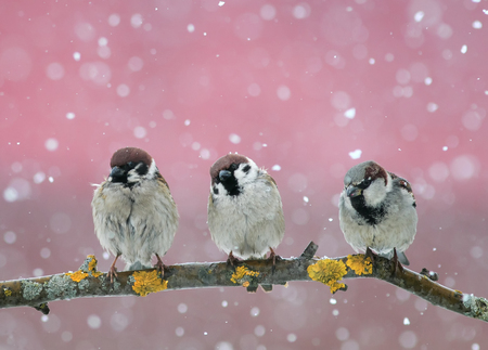 funny little birds sitting on the branch in falling snow in the new years eve Lizenzfreie Bilder