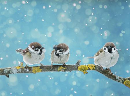 새 해 이브에 떨어지는 눈에 지점에 앉아 재미있는 작은 새들