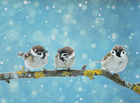 funny little birds sitting on the branch in falling snow in the new year's eve
