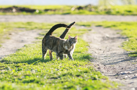 couple cute funny kitten walking arm in arm at the juicy green grass
