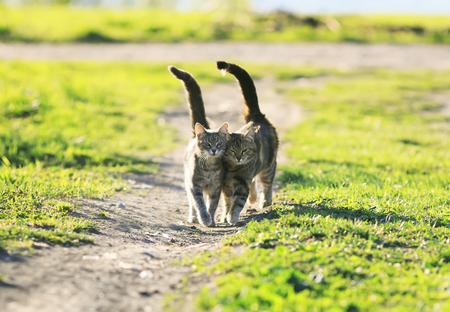two beautiful cute kitten walk together in a juicy green grass