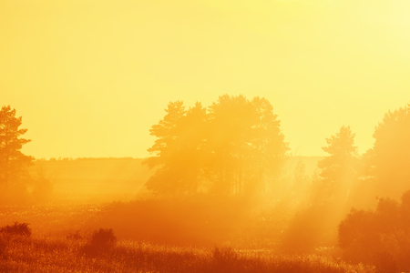 landscape with  Golden rays of the setting sun pierces through the forest Stock Photo