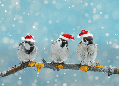 Christmas card with funny birds sitting on a branch in winter in the snow in a red festive hat Stock Photo