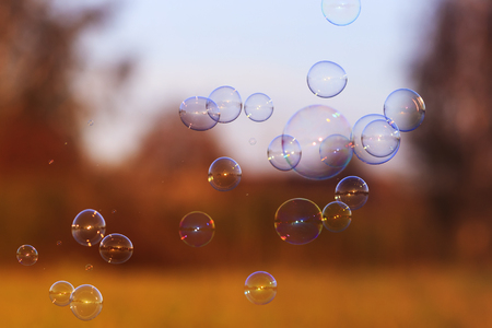 beautiful festive background with iridescent soap bubbles flying over a sun-drenched meadow