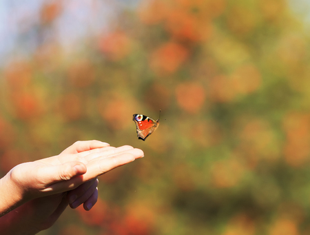 a beautiful butterfly flew into the sky to meet the sunlight with his hands girls in the garden