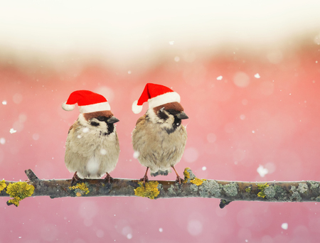 two funny little birds in festive Christmas hats sitting on a branch during a snowfall