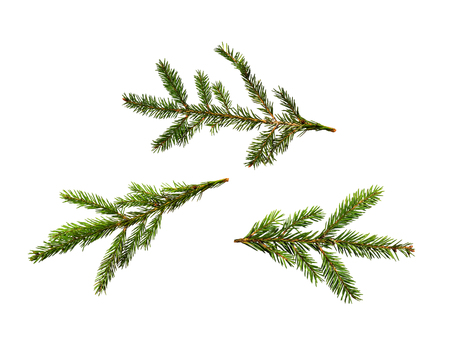 set of Christmas green fir tree branches on white isolated background