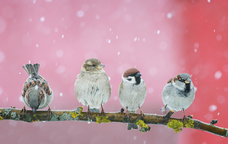 beautiful little Christmas birds sitting on a branch in the garden and funny looking right in the snow
