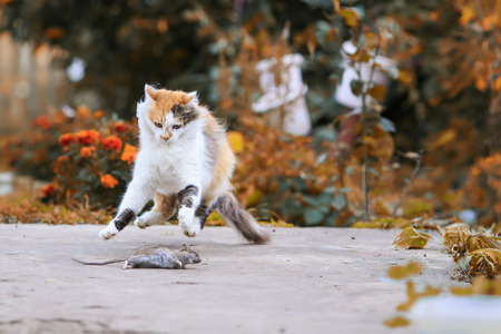 beautiful cat caught a mouse in the summer garden and fun and jumping and playing with her Lizenzfreie Bilder