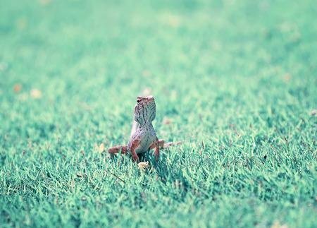 portrait of cute little lizards hunt among the juicy grass in the meadow