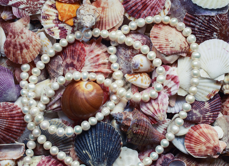 beautiful elegant marine background with colorful shells of different shapes and sizes and chic necklace of pearls