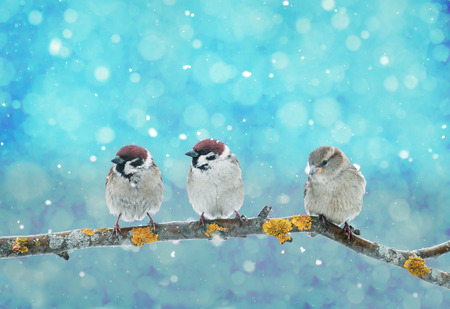 three little funny birds sitting in a Christmas Nativity Park during a snowfall