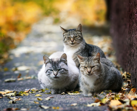 three funny stray cat lying in the street in the sun in the fall and the entrance