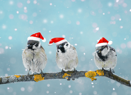 Drei Spaß kleine Vögel in der Weihnachten festliche Mütze im Winter Park