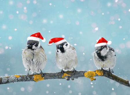 three fun little birds in the Christmas festive cap in winter Park