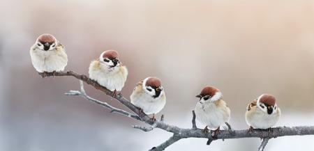 fünf lustige kleine Vogelspatzen, die auf einem Zweig im Wintergarten sitzen, buckelten