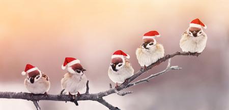 five cute little birdies sitting in a fun Christmas hats on a branch in winter, Sunny garden