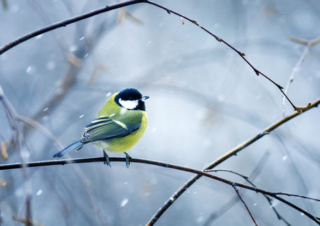funny nice bird the bird sits hunched on a branch in winter forest in the snow Stock Photo